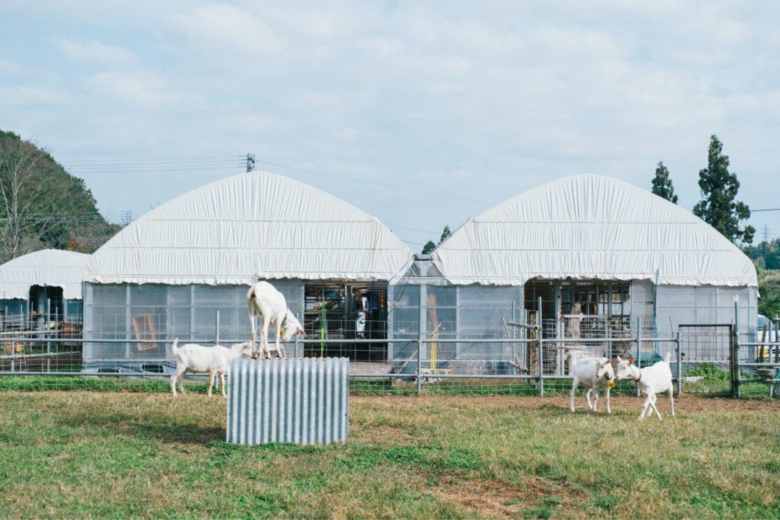 ゆったりとした空気が流れる山羊牧場