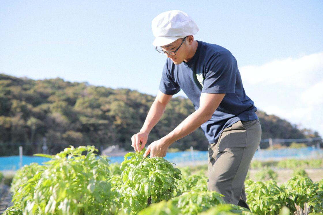 「世界一美味しい」味や香りのためにこだわった露地栽培