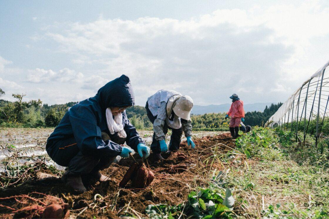 加工業だけではなく、農業にもチャレンジ