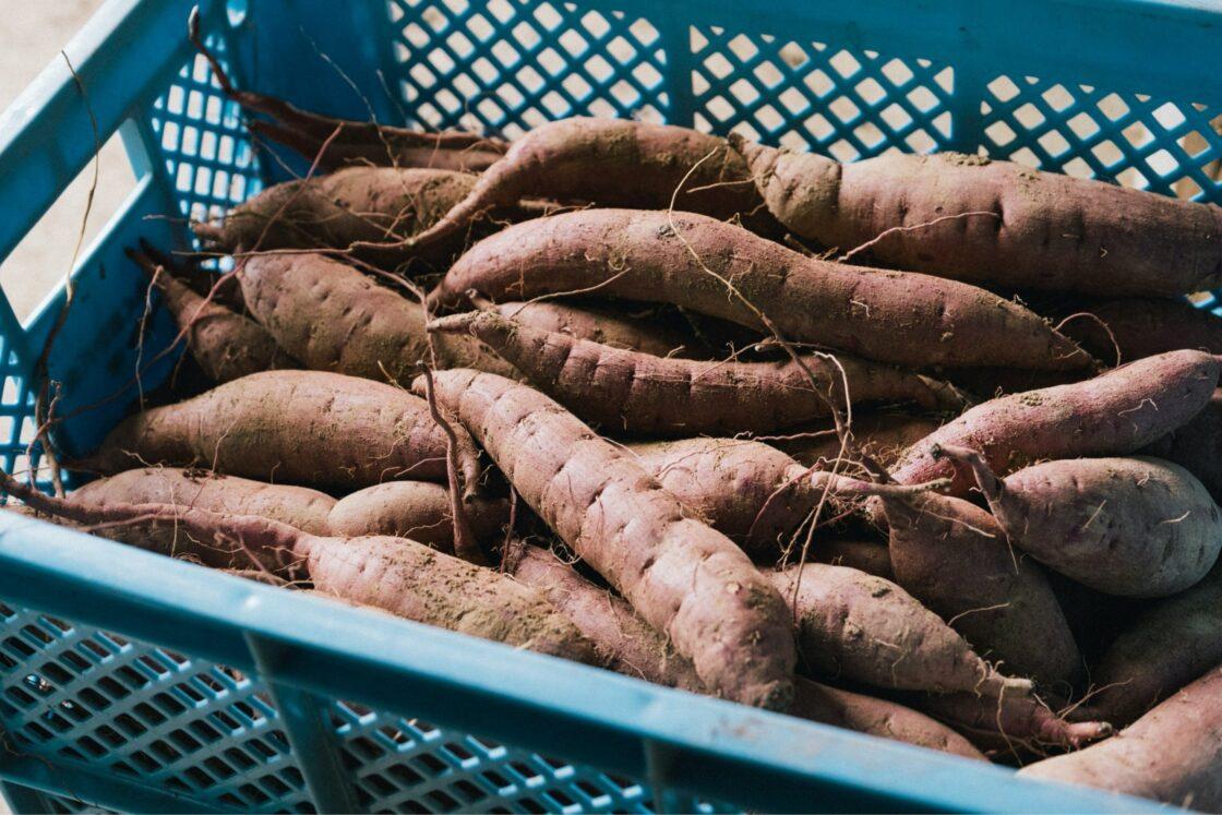 豊後大野市でとれるサツマイモがベトナムのホーチミンでも人気に