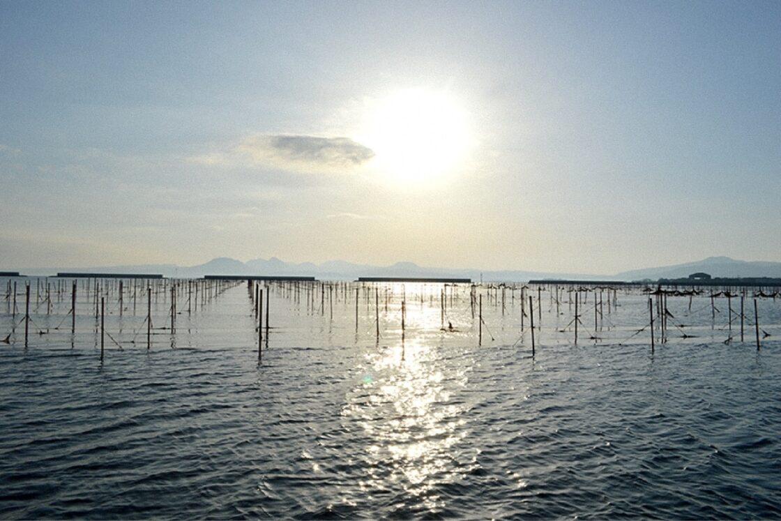 海苔養殖が行われているのは県北(宇佐市・中津市)の周防灘