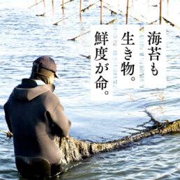 有限会社鶴亀フーズ-海苔も生き物。鮮度が命。