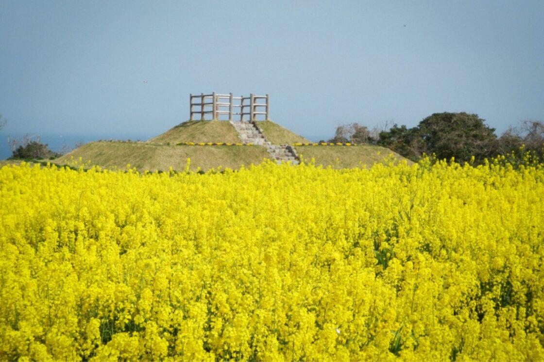 """春は菜の花が2200万本、夏はひまわりが150万本咲き誇る""""花の岬"""""""