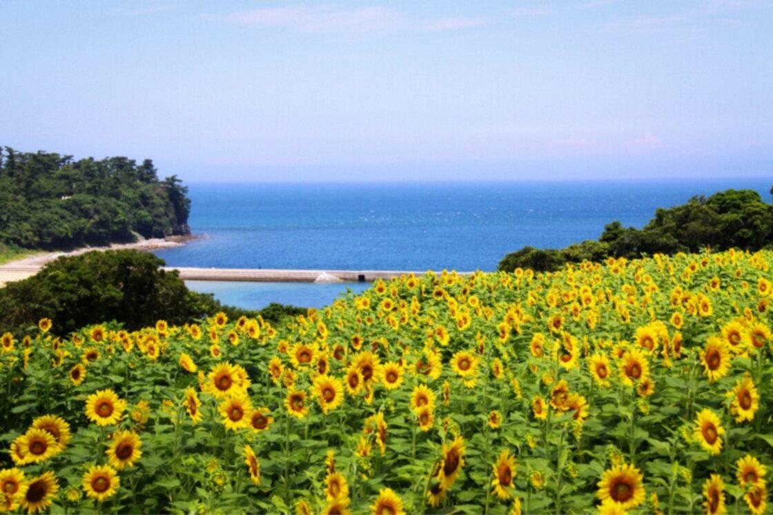 人と自然にやさしいことを大切にしたいという思いから、花は農薬を使わずに、愛情を込めて育てられています
